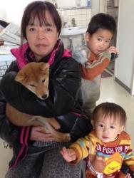 ケンケン 柴犬 オス 2013.7.5生まれ