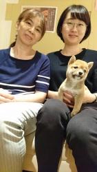 (華 柴犬).jpg